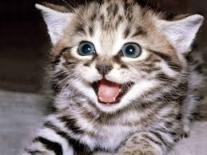 Kahve Falında Kedi Görmek